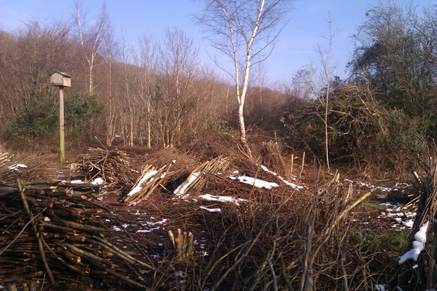 Hazel Coppice at Taggarts Wood, nr Clevedon