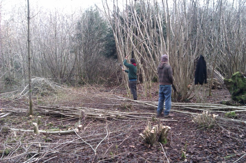 Volunteers in Leigh Woods cutting and dressing out Coppice